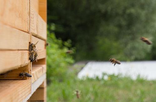 Bienenprojekt an der Justus-von-Liebig Schule Aalen
